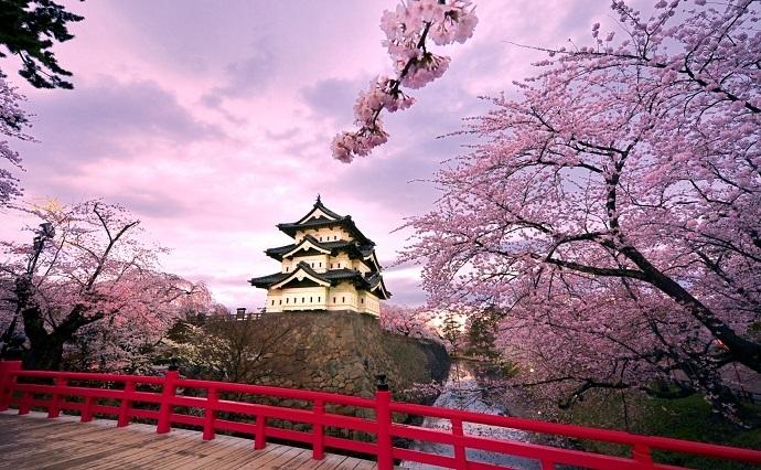 Vẻ đẹp say đắm của những mùa hoa Nhật Bản