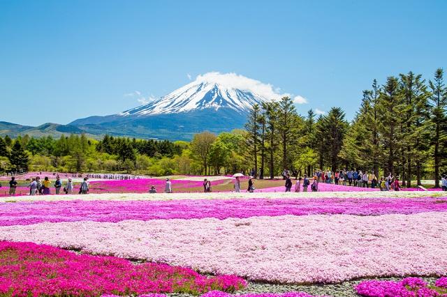 Hương sắc 4 mùa ở Nhật Bản