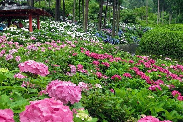 Gợi ý những điểm ngắm hoa tuyệt đẹp ở Nhật Bản